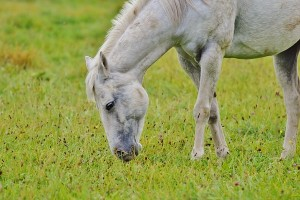 Self-hypnosis to help horse rider get back in the saddle